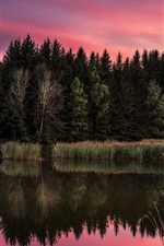 Trees, lake, reed, red sky, clouds, sunset