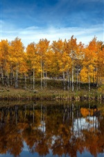 Preview iPhone wallpaper Trees, lake, yellow leaves, autumn