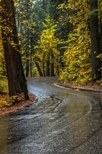 Preview iPhone wallpaper Trees, road, wet, autumn