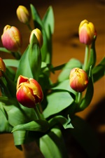Preview iPhone wallpaper Tulips, yellow red petals, leaves