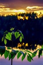 Galhos, folhas verdes, gotas de água, rio, crepúsculo