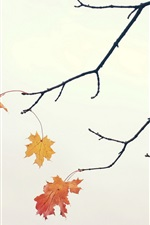 Preview iPhone wallpaper Twigs, maple leaves, autumn, white background