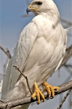 Preview iPhone wallpaper White feather eagle