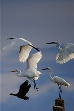 Preview iPhone wallpaper White feathers birds, flight, sky