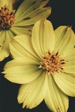Preview iPhone wallpaper Yellow petals flowers, macro