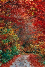Preview iPhone wallpaper Autumn, red leaves, path, trees