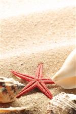 Beach, sands, seashells, starfish