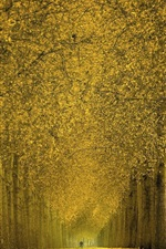 Preview iPhone wallpaper Beautiful autumn, trees, yellow leaves, path