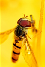 Preview iPhone wallpaper Bee, yellow flower, pistil