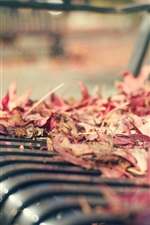 Bench, red leaves, autumn, blurry