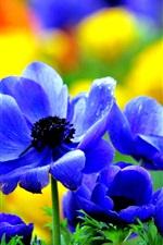 Blue flowers bloom in spring