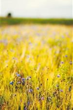 Preview iPhone wallpaper Blue wildflowers, grass, fields