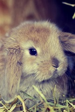 Preview iPhone wallpaper Bunny, dry grass
