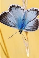 iPhone fondos de pantalla Mariposa, polilla, insecto, hierba