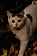 iPhone fondos de pantalla Gato, otoño, hojas, oscuridad