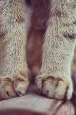 Preview iPhone wallpaper Cat paws