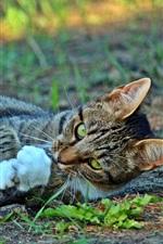 Кошка игривая, земля, трава
