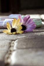 iPhone обои Мел и цветы, земля