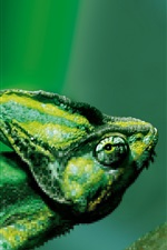 Preview iPhone wallpaper Chameleon, green, blurry background