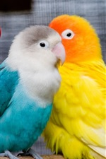 Preview iPhone wallpaper Colorful parrots, lovely birds