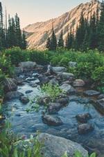 Creek, stones, wildflowers, trees, mountain