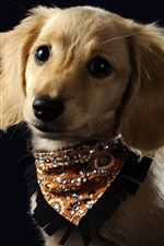 Preview iPhone wallpaper Cute dog, brown, scarf, black background
