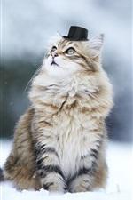 Preview iPhone wallpaper Cute kitten, hat, humor