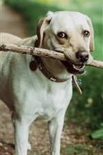 Dog catch a stick