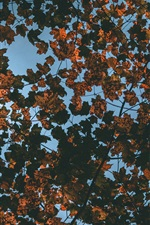 Preview iPhone wallpaper Dry leaves, tree, top view, autumn