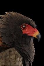 iPhone обои Орел, птица, черный фон
