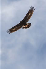 Preview iPhone wallpaper Eagle flight in the sky, wings, clouds