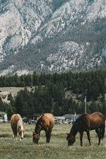 Preview iPhone wallpaper Five horses, mountain, trees, grass