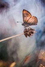 iPhone fondos de pantalla Bosque, mariposa, hierba, bokeh