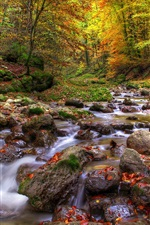 Preview iPhone wallpaper Forest, streams, stones, water, autumn