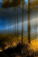 Preview iPhone wallpaper Forest, trees, grass, path, sun rays, fog, morning