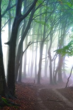 Preview iPhone wallpaper Forest, trees, path, fog, nature scenery
