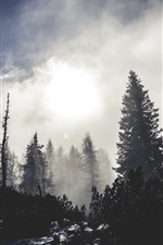 Preview iPhone wallpaper Forest, trees, snow, fog, morning