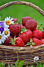 Preview iPhone wallpaper Fresh strawberries, basket, grass, flowers