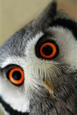 Preview iPhone wallpaper Furry owl, eyes, look