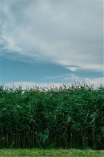 Grass, fields, sky, dusk