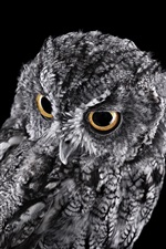 Preview iPhone wallpaper Gray owl, black background