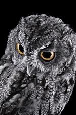 Gray owl, black background