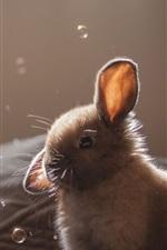 Preview iPhone wallpaper Gray rabbit, bubbles