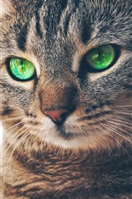 Preview iPhone wallpaper Green eyed cat, gray stripes