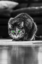 Preview iPhone wallpaper Green eyed gray cat, front view, living room