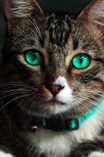 Preview iPhone wallpaper Green eyes cat front view, look