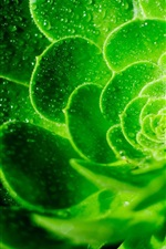 Preview iPhone wallpaper Green flower macro photography, water drops