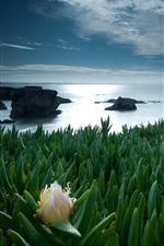 Green plants, leaves, sea, flower, clouds, dusk