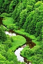 Preview iPhone wallpaper Green rainforest, stream