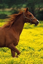 Preview iPhone wallpaper Horses running in the yellow flowers field
